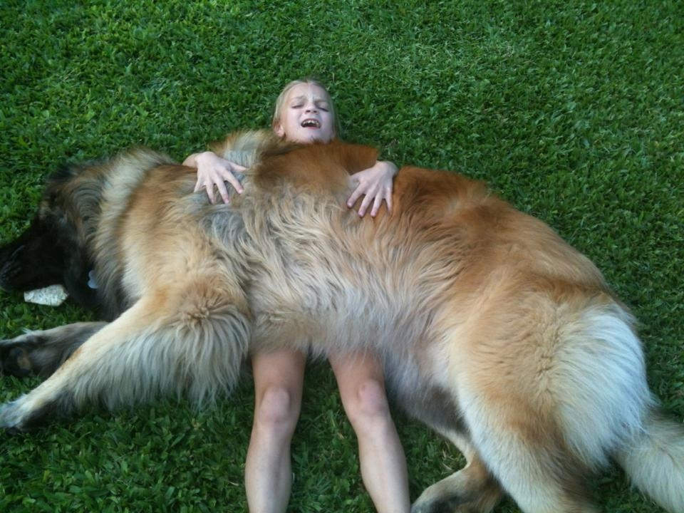 What Is A Leonberger? | asgardkennel